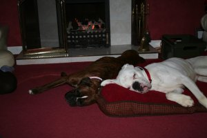 Jobe and Roxy by the fire